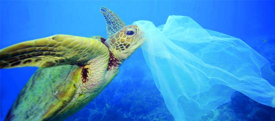Bolsas plásticas: Su prohibición y el inicio de la discusión biodegradable