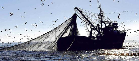 Anulación de una ley: El caso de la Ley de Pesca